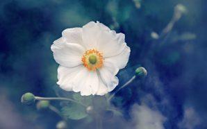 Pudełko pełne kwiatów – poznaj flowerbox!
