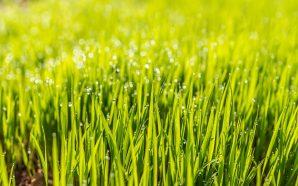 Obrzeża trawnikowe – dlaczego warto na nie postawić?