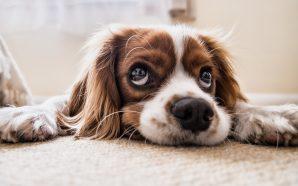 Wybieramy zabawkę dla psa. Na co zwrócić uwagę?